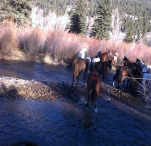 Colorado dude ranch horses crossing the Conejos River.